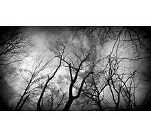 One creepy tree line Photographic Print