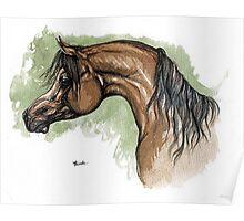 The bay arabian horse portrait Poster