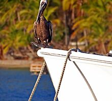 Pelican on the bow by Leon Heyns