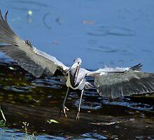 Heron on board by Shelby  Stalnaker Bortone