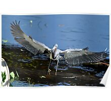 Heron on board Poster