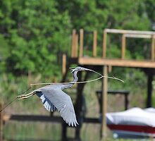 Big Stick for a Small Bird by Shelby  Stalnaker Bortone