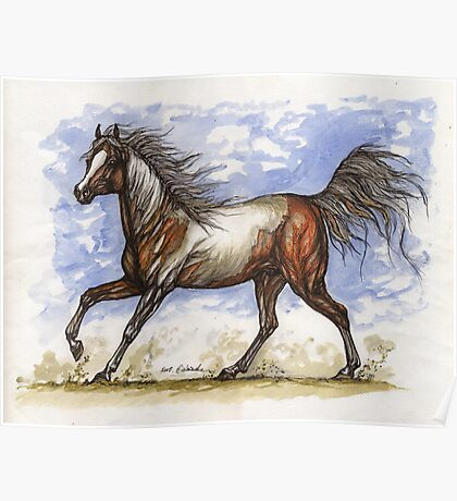 wild pinto mustang Poster