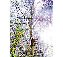 Forestry Lightened  Photographic Print