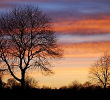 Markeaton Park, Derby by Luci Mahon
