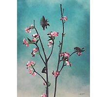 Hummingbears Photographic Print