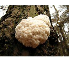 Woodland Cauliflower Photographic Print