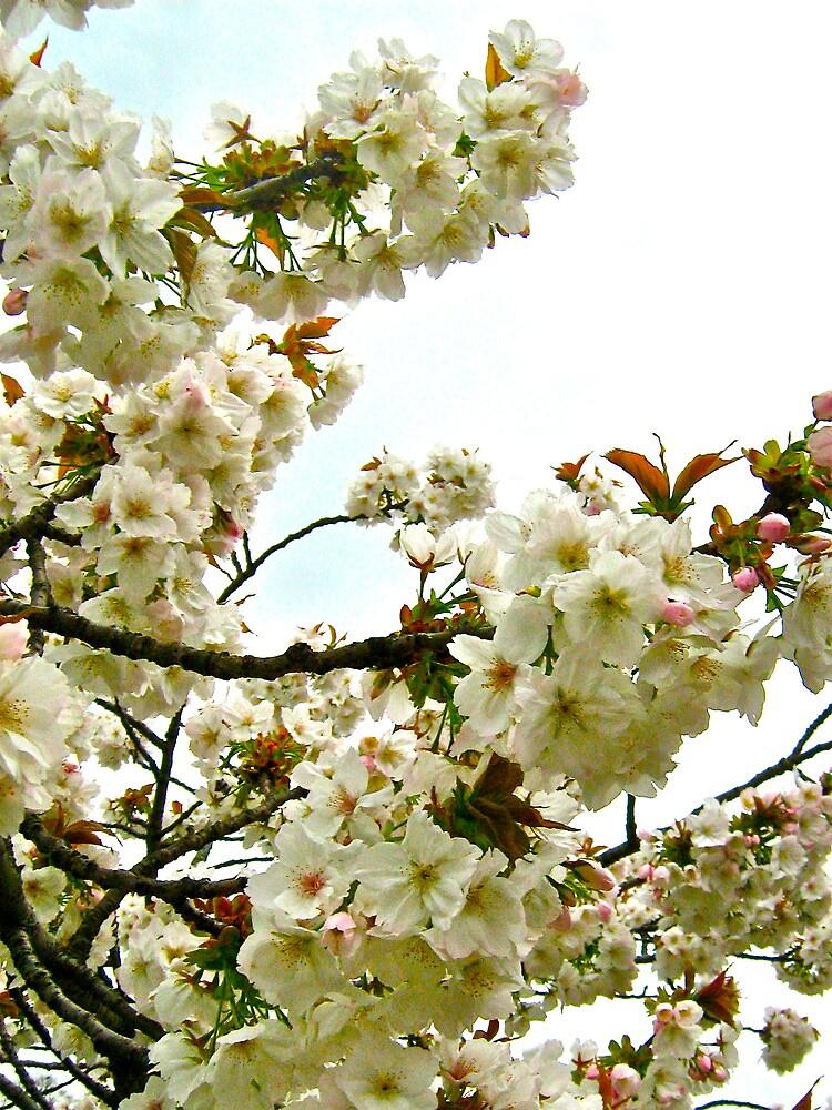 Cherry Blossom v.1 by Lorna81