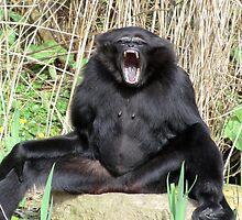 Cheeky monkey! by Sheridan Farrow