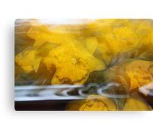Daffodils in a Daze Canvas Print