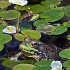 A Frog and a Flower - My Backyard Pond by Debbie Pinard