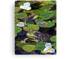 A Frog and a Flower - My Backyard Pond Canvas Print