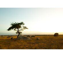Sunsetting on the Lone Tree Photographic Print