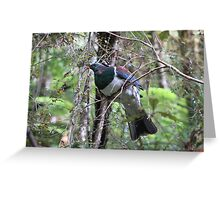 NZ wood pigeon Greeting Card