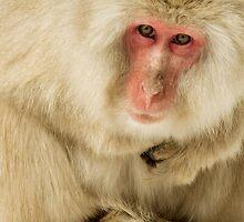 Snow Monkey by amdiederich