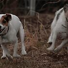 JRT's at Full-Tilt by Ken McElroy