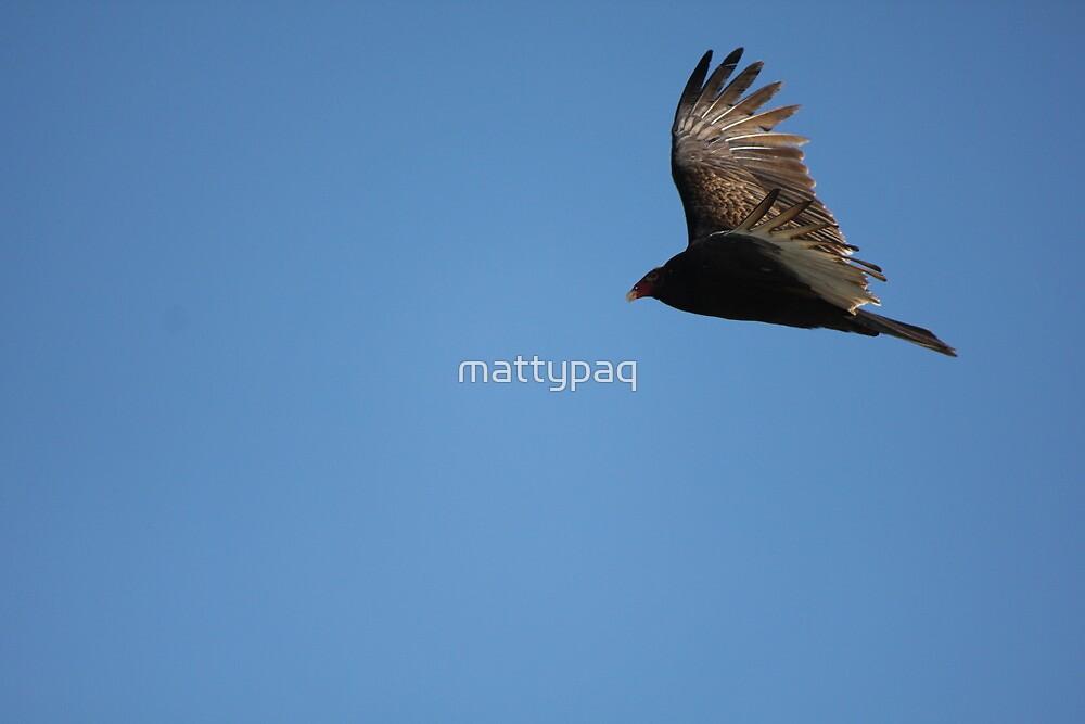 hard flight to catch by mattypaq