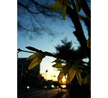 My street Photographic Print