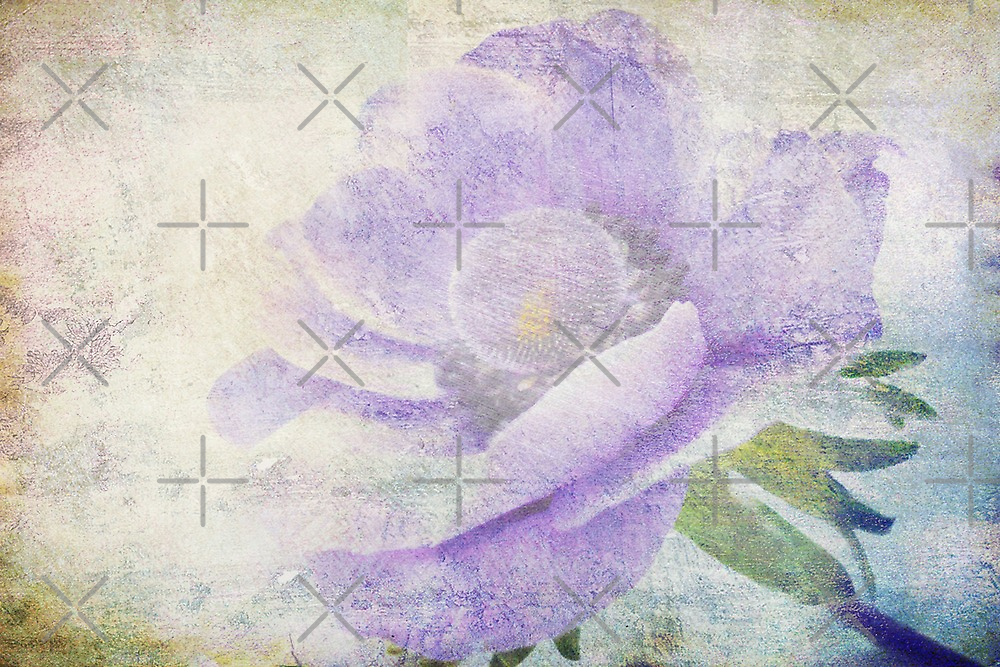 Anemone by EvaMarIza