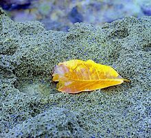 Golden leaf on beach rock, Puerto Rico by Alberto  DeJesus
