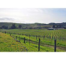 Napa Valley Vineyard Photographic Print