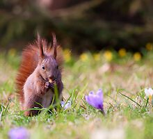 Spring Squirrel by seawhisper