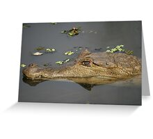Caiman crocodilus_Manaus, Brazil Greeting Card