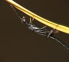 Wasp on an Orange Petal by earthsmate