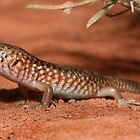 Lizards of Australia by tiliqua