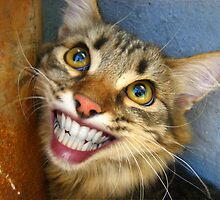 Smiling cat by basil bunni