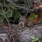 Squirrel on a log by KansasA