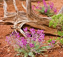 Wildflowers & Red Dirt by Kim Barton