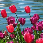 Tulips in the Breeze by Robert Stephens