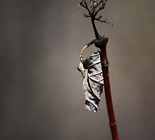 Last Leaf by Laurie Minor