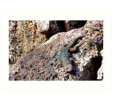 Western Fence Lizard Art Print