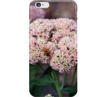 Honey Bee Heaven iPhone Case/Skin