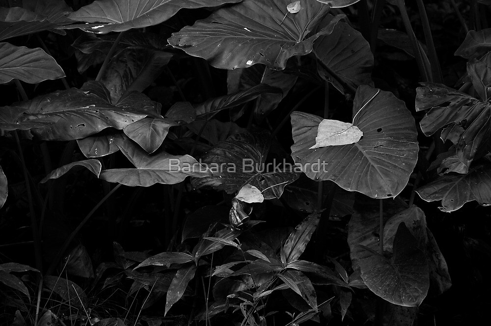 Rainforest in Black & White by Barbara Burkhardt