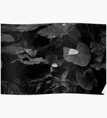 Rainforest in Black & White Poster