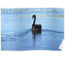 Black swan #7 - Ballarat Poster