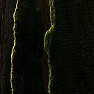 Moss on burned Redwood by Zane Paxton