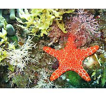 Under the Sea - Starfish Photographic Print