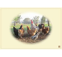 The Rooster and His Girls Photographic Print