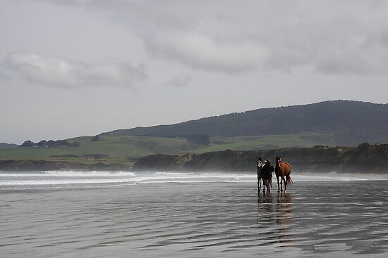 The Horses - Monkey Island - NZ by ravensnatch