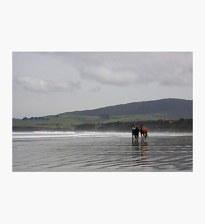 The Horses - Monkey Island - NZ Photographic Print