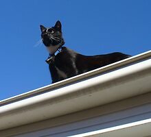 Shorty the rooftop sentinel by DashTravels