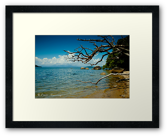 Dunk Island by Paco  Murray