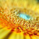Yellow Gerbera by Hege Nolan