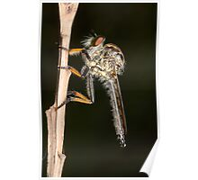 Common Yellow Robberfly - Ommatius sp. Poster