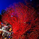 Sea Fan 1 by Dawn Eshelman
