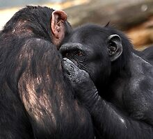 All I want is a cuddle. by Mark Hughes
